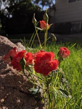 garden34