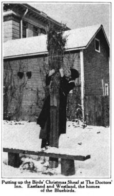 Dr. Hebard feeding the bluebirds at Christmas, Glimpses From Agnes Mathilde Wergeland's Life pg 170